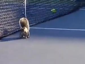 Squirrel interrupts U.S. Open