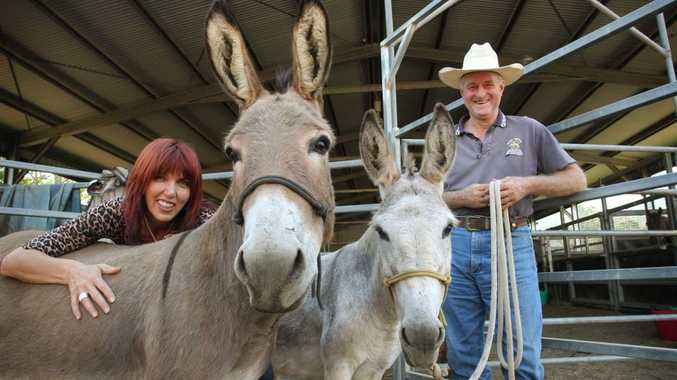 Margy Manfield meets Trilby and Maggie the Jerusalem donkeys that have been found with the help of Conondale's Peter Grieve, pictured, to play important roles in this year's Nambour Christmas Carols.