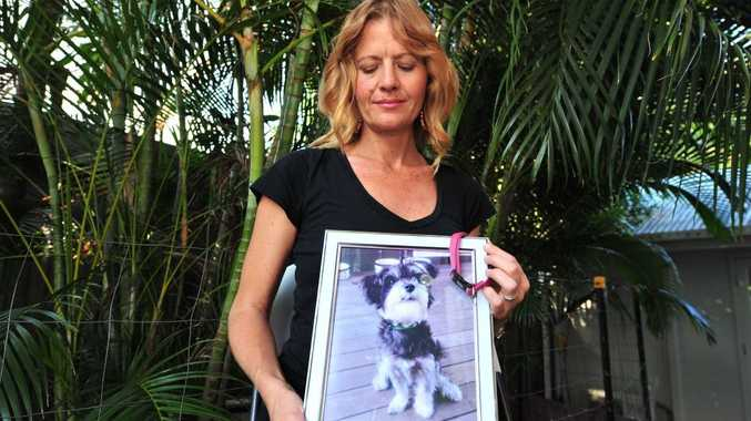Lisa Mills with a photo and collar of her dog Roxy, knocked down and killed on Sugar Road, Maroochydore.