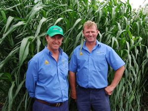 Pacific Seeds show off new hybrids at agronomy workshop