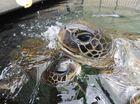 Turtle-y awesome sight at Urangan marine aquarium