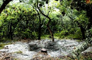 The shallow grave near Broadwater National Park where the body of Jack Garda was found in 2010.
