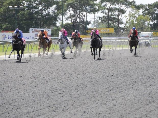 Clifford Park's synthetic race track will be replaced next year with a grass surface.