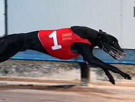Greyhound High Earner