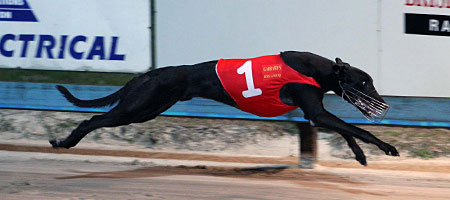 How much can a greyhound earn? Heaps, if you own a good one