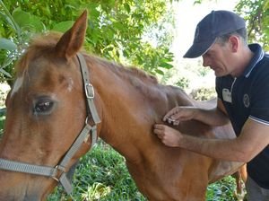 Horse owners urged to vaccinate after hendra death in Mackay