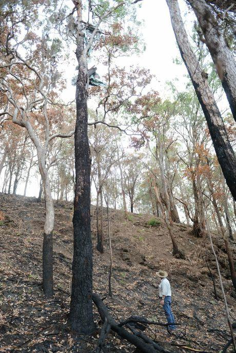 The aeroplane crash site on the Hart's Oakwood property at upper Kandanga.