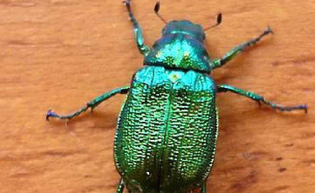 What bug us about creepy crawlies? | Coffs Coast Advocate
