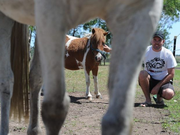 Ben Dorsett from Craignish with five-year-old miniature horse Leroy.
