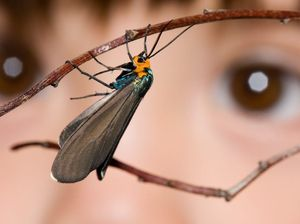 Bugs come alive at Cobb and Co Museum