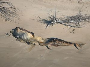 Beached whales appear to have died from natural causes