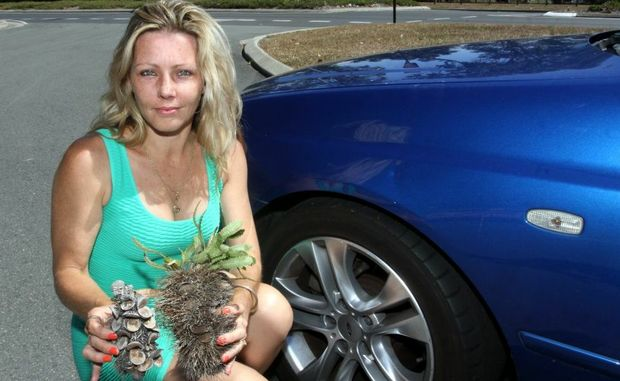 Toni Leitch inspects the damageto her car after a banksia was thrown at it. Photo Vicki Wood / Caboolture News