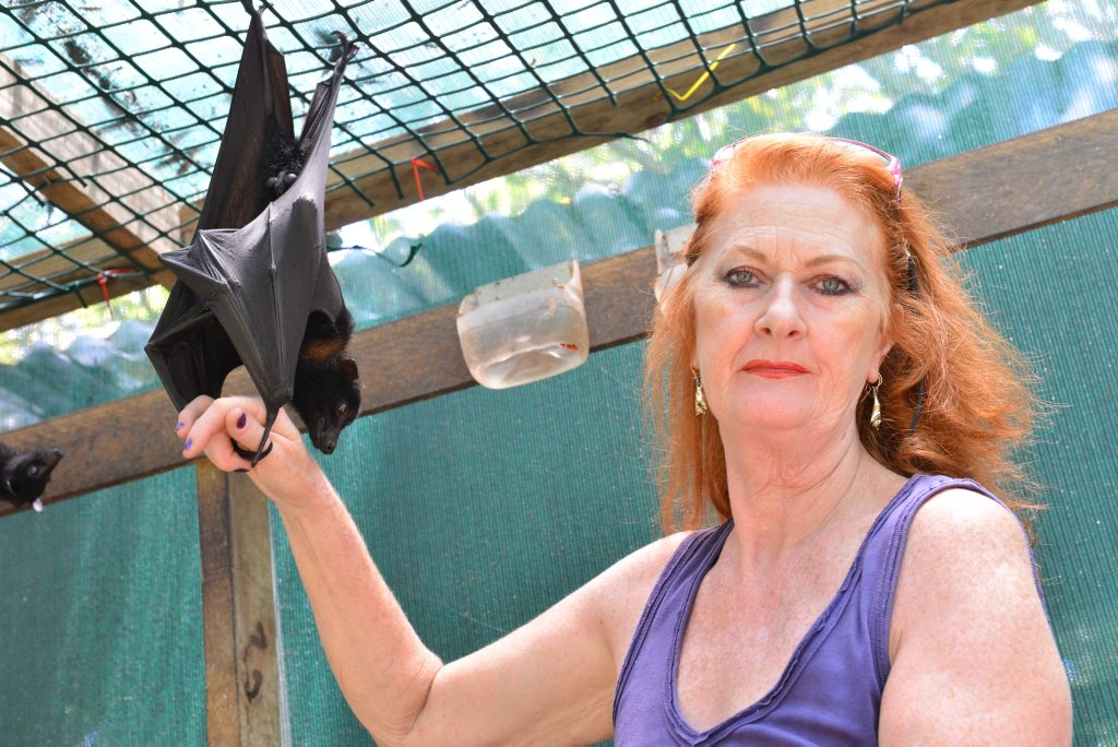 NOT A PEST: President of Queensland Wildlife Christine Wynn speaks out in the bats defence. Photo: Scottie Simmonds / NewsMail