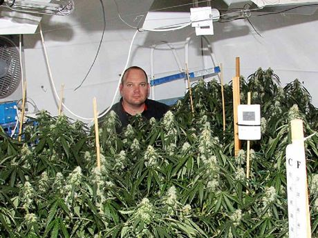 Plain clothes Senior Constable Chris Lawson from Kingaroy CIB at one of the hydroponic operations.