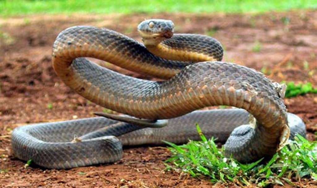 A girl believes she was bitten by a brown snake at Illaroo campground near Minnie Water on Tuesday night.