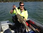 Danny Galea with a 74cm flathead caught at Baffle Creek Photo Contributed