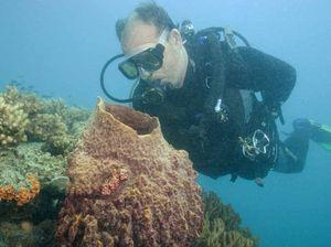 Keswick Island dive tours kick off
