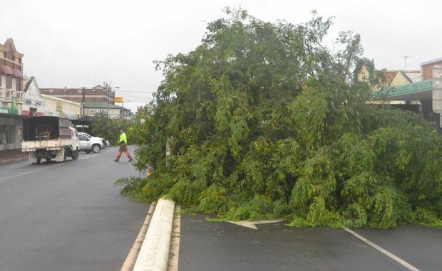 Damaging wind gusts knock over several trees on Roma's McDowall Street.