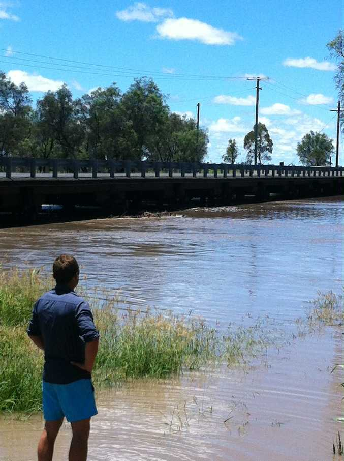 Will Matchett watches the Condamine River rise under the Toowoomba Cecil Plains Rd at Cecil Plains.