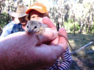 Landholders learn about backyard biodiversity