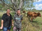 Joan and Rodney Mackie from Bridge Rd at Yengarie helped to save cattle and horses as the flood waters rose.