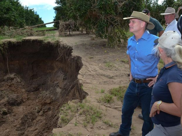 HOLE LOT OF WORK: Campbell Newman surveys the damage to a citrus orchard in Gayndah. Photo Brandon Livesay / Central & North Burnett Times