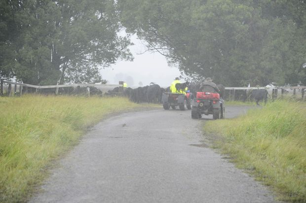 Clarence Valley farmers move cattle to higher ground near Gilletts Ridge.