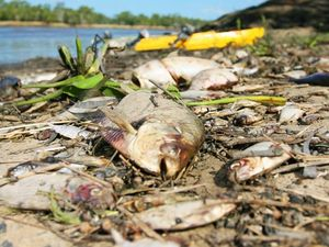 State Gov't says tests on dead fish show lack of oxygen