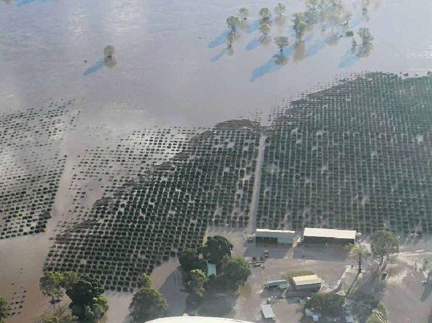 UNDER WATER: Much of Abbotsleigh Citrus farm was inundated.