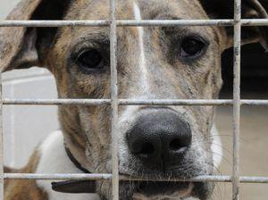 Pet registrations jump by 2700 ahead of council doorknock