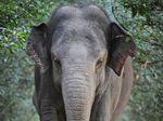 Drunken safari guide dismissed after charging elephant