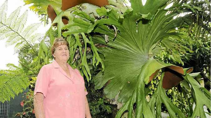Pam Stuckey of Casino, pictured in her garden, is preparing for the up and coming Flower Show and Garden Fair from the Casino and District Garden Club on March 2nd in Casino.