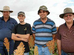 Grain field day a hit