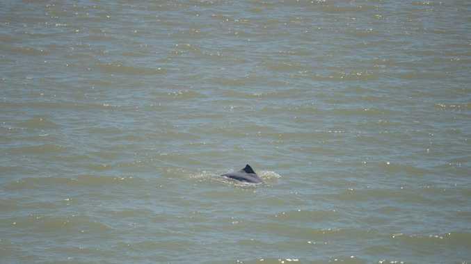 Dolphins swimming near RG Tanna Coal Export Terminal. File photo.