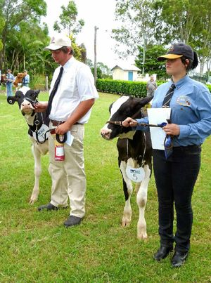 WHAT CLASS: At last year's calf day, Skye Creed (Nambour High School) was first and Todd Brown (Bells Bridge) second in the 14-18 years' handler class.