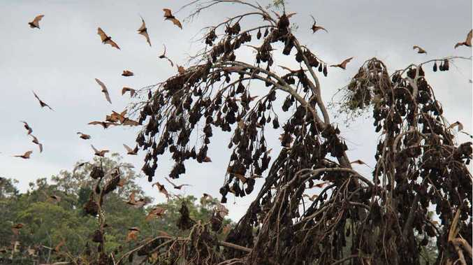 Health fears soar over two colonies of bats near Warwick High School.