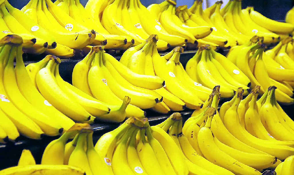 Questions are being asked about the future of the Coffs Harbour banana industry.
