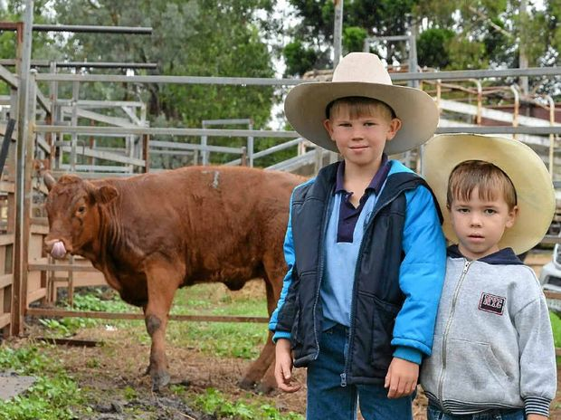 EARLY START: Youngsters Mitchell, 7, and Cody Muller, 4, with their ribbon-winning steer at Killarney Show.