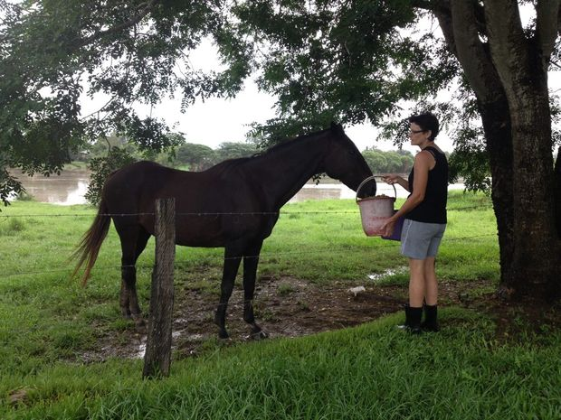 Maryborough resident Fae feeding her 19-year-old horse Lucy in the Pocket area on Wednesday morning.