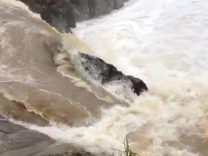 Wappa Falls in full flood