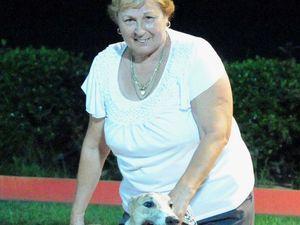 Casino greyhound to run a dozen