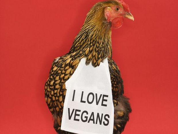 Golden Laced Wyandotte chicken wearing sign reading I love vegans.
