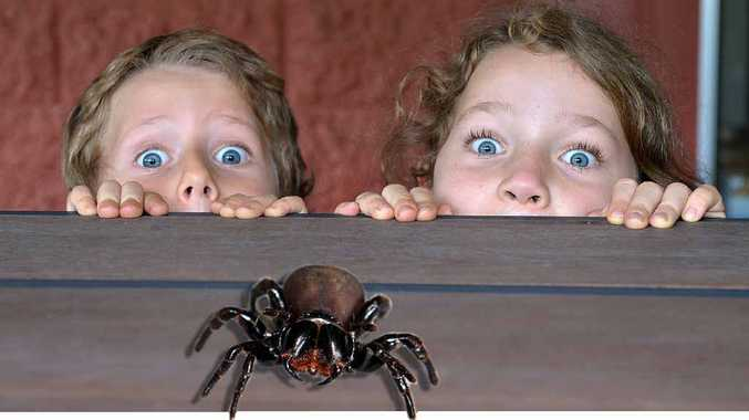 Five-year-old Dean McKennett and sister Claire, 7, take care around mouse spiders, like the one found in their Woombye garden. (Digitally modified image)