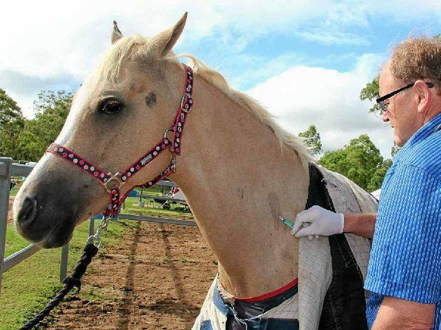 Vet Greg Harris injected Scots PGC Horse Toby against Hendra.