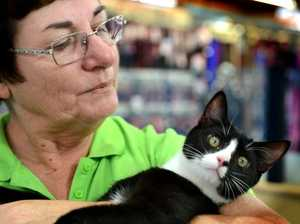 Cats given a second chance through adoption day