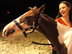 Aussie performers set to shine in Cavalia