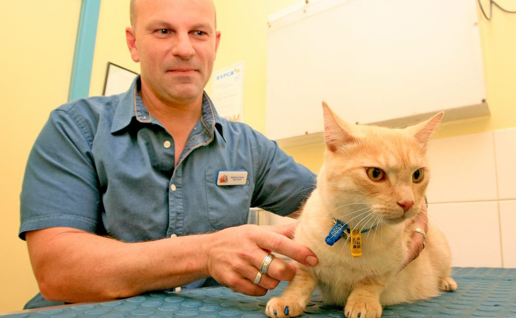 Vet Matthew Carey with fully vaccinated cat Lynx.