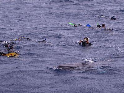 Dwarf Minke whale encounters on Eye to Eye Marine Adventures.