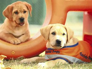 Special Guide Dogs event to be held