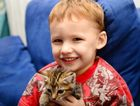 Ryley Scofield, age 3, with foster kittens Marvel. Rockhampton foster carer with Queensland Animal Aid. Photo Sharyn O'Neill / The Morning Bulletin